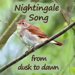 nightingale-song-from-dusk-to-dawn
