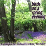 birds-on-a-spring-evening